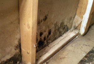 Mold-Remediation-Drywall-Growth